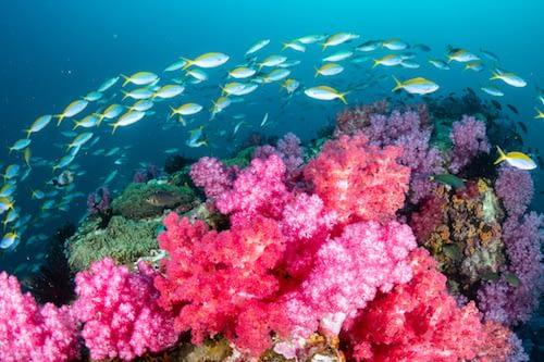 West Waigeo National Park Wayag Raja Ampat Marine Park