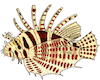 Lionfish Raja Ampat Marine Park