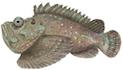 Raja Ampat Marine Park Authority Stonefish