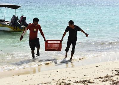 Raja Ampat Marine Park Authority Crown of Thorns Starfish 5