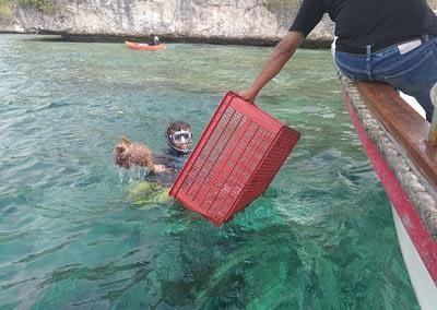 Raja Ampat Marine Park Authority Crown of Thorns Starfish 6
